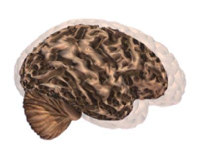cerebro-e-alzheimer